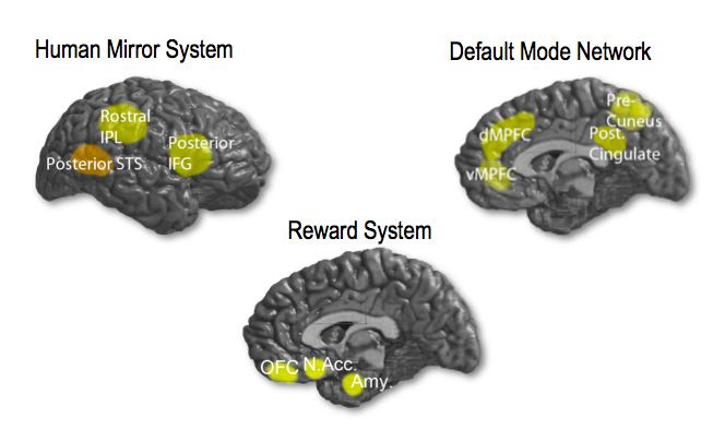 losin et al. (2009)  progress in Brain Research