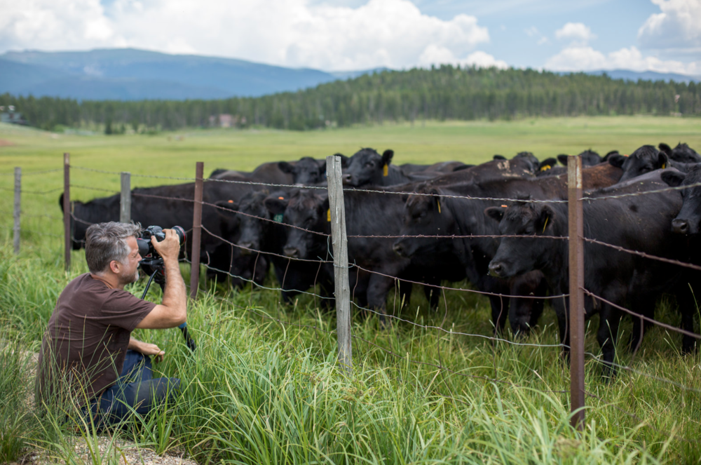 Yes, he is filming cows. Establishing a location is part of storytelling. We were filming a wedding in Colorado. The cows were super cute!