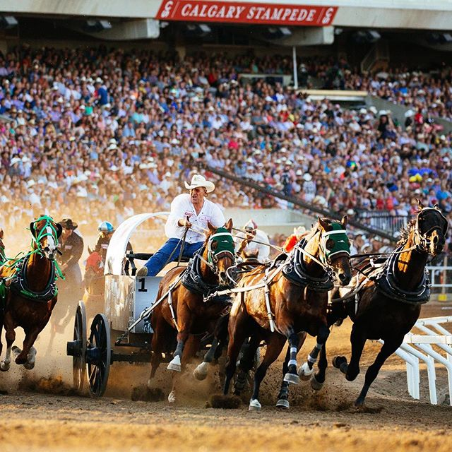 The mighty #KellySutherland sizes up the competition around turn one in heat three of the @calgarystampede Rangeland Derby July 9th. . . . .  #exploringtheglobe #aroundtheworldpix #adrenaline #actionsports #awesome_earthpix #adrenalinerush #roamtheplanet #HypeBeast #vscoportrait #ig_mood #discoverportrait #travelalberta #profile_vision #bleachmyfilm #postmoreportraits #portraitpage #captureyyc #calgaryisbeautiful #yycphotographer #calgaryphotographer #sharecalgary #canonphotos #canoneos #canonrebel #canonphotographer #yyc #stampede2017 #rodeo