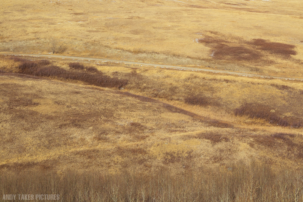 A photograph of nose hill in Calgary. It is browner than usual and there are dead trees at the bottom of the frame. It is very abstract.