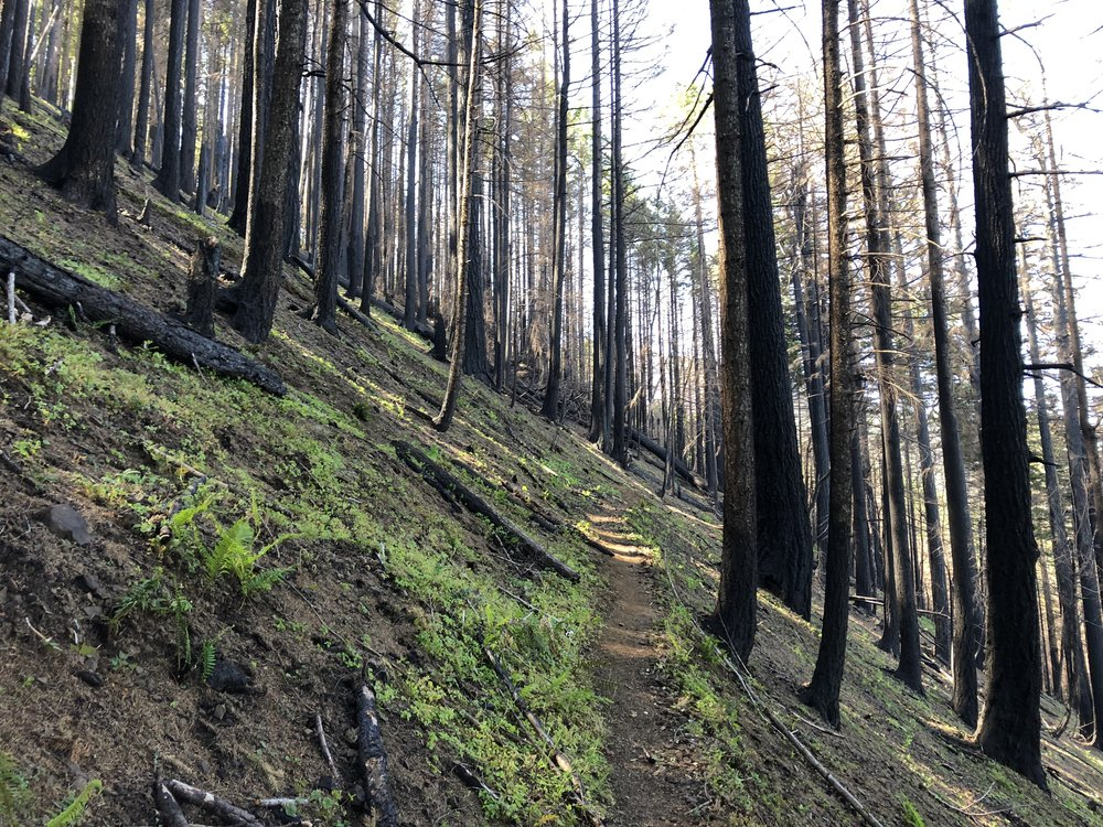 Evidence the Eagle Creek Fire passed through the Mt. Defiance trail.