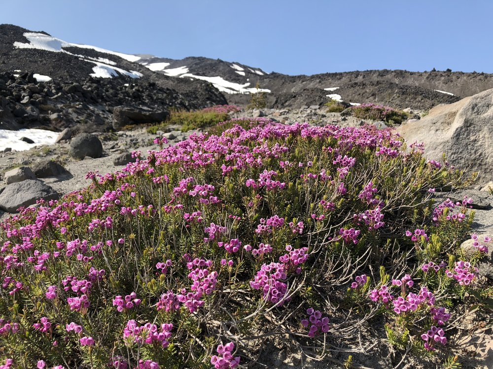 2018-06-06 Mt. St. Helens 070.JPG