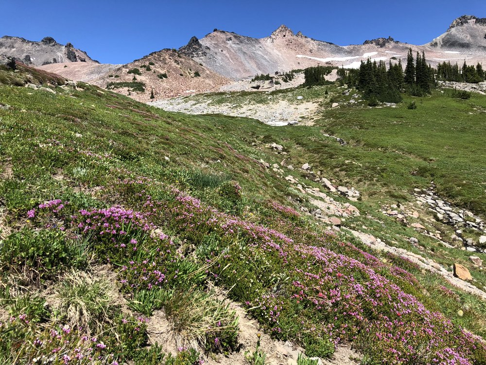 Goat Rocks and wildflowers.