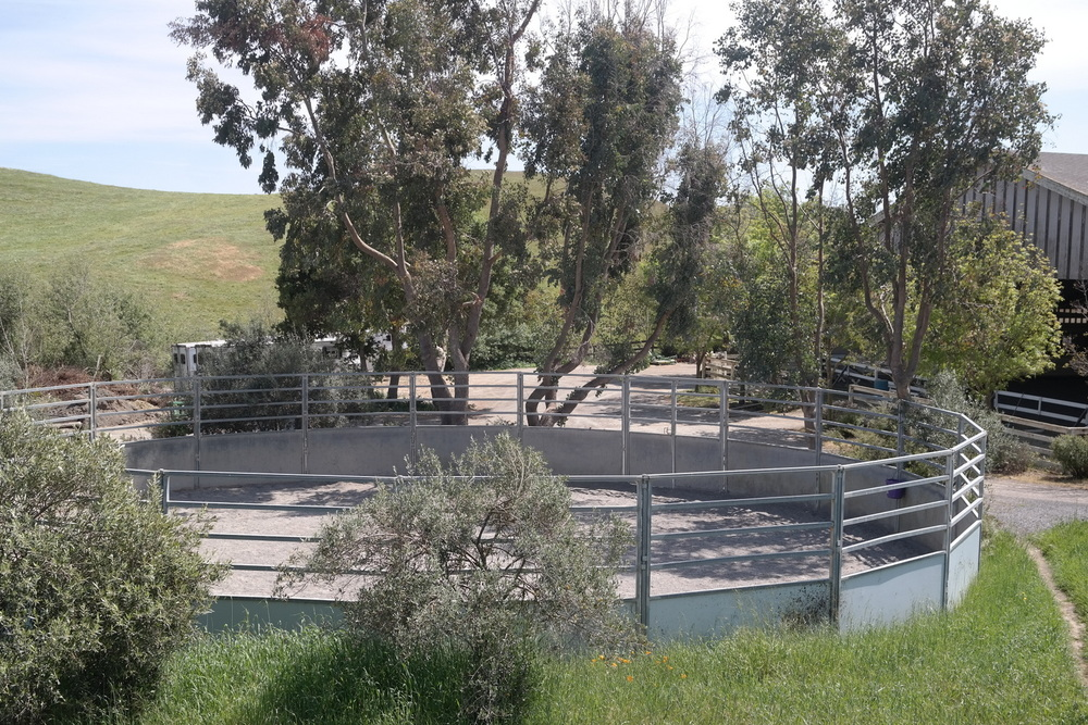 Round pen amidst olive trees.jpg