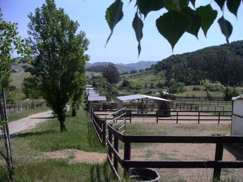 Outside Paddocks with Cover left.JPG