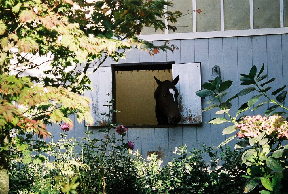 Georgina window.jpg
