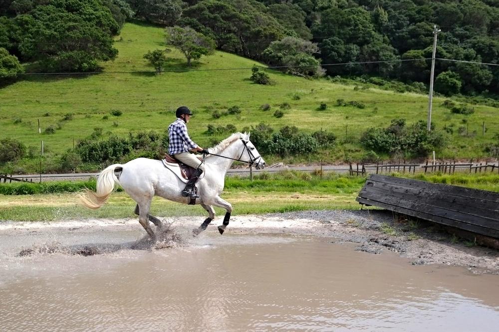 David & Finn gallop the water.jpg
