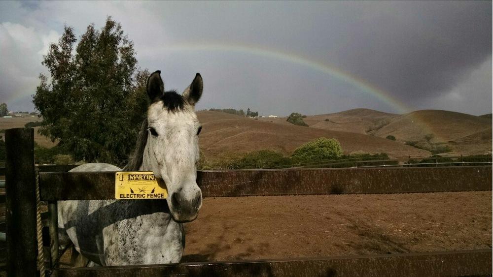 Merlin & rainbow.jpg