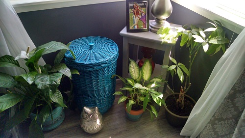 Plants from dining room and little table from by the front door.