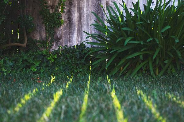 yard with fence.jpg