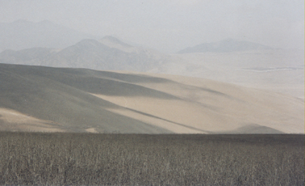 Lomas de Lachay, lower reaches during the fog-free part of the year. The low, grey vegetation in the foreground and middle-ground is otherwise bright green (my photo)