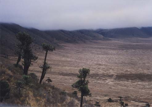 Ngorongoro Crater, Tanzania, with dry grassland on the crater floor and cloud forest on the rim (my photo)