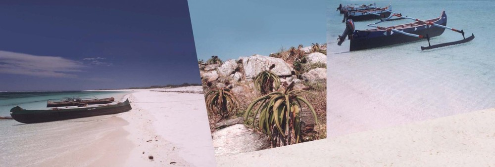 at the aloes 