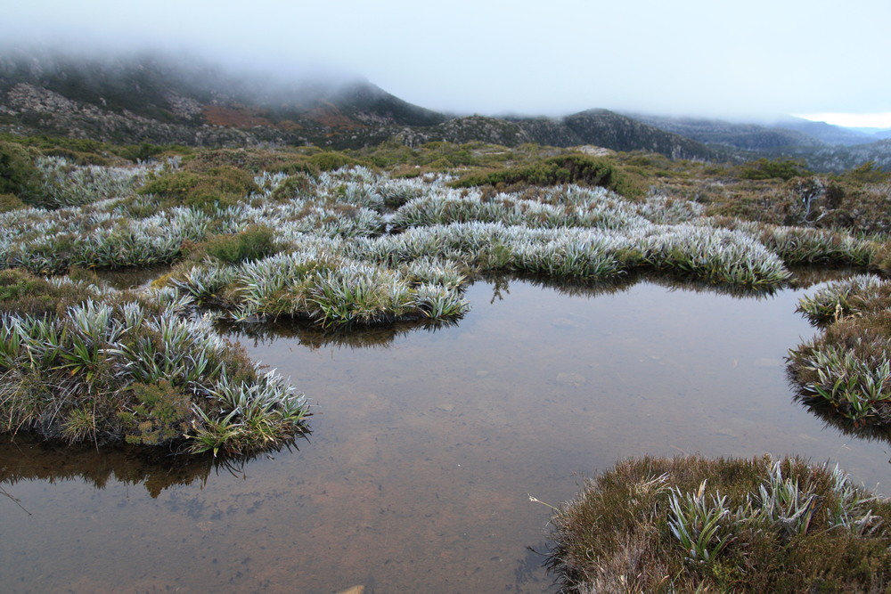Mt. Field National Park, Tasmania (my photo)--I don't think this area is perpetually wet enough to qualify as moorland, but it's still a very picturesque example of a boggy alpine landscape