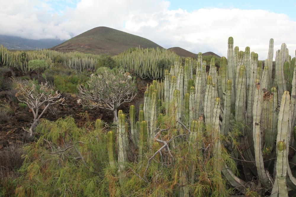 Malpais de Guimar, Tenerife