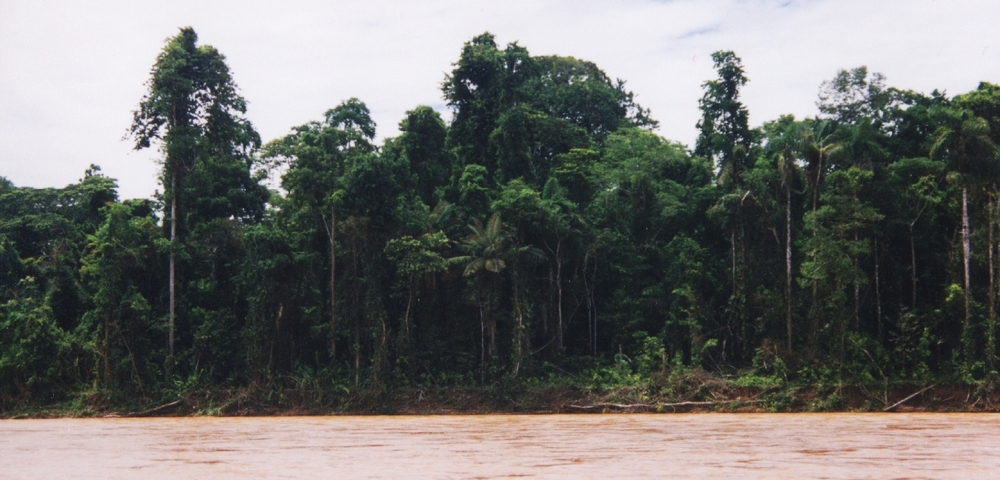Rainforest along the Tambopata River, Tambopata-Candamo Reserved Zone, Peru (my photo)
