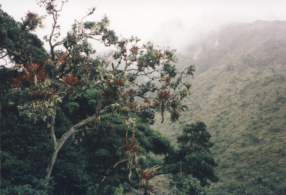 inca trail-peru-bromeliads-mist-camino-mountains
