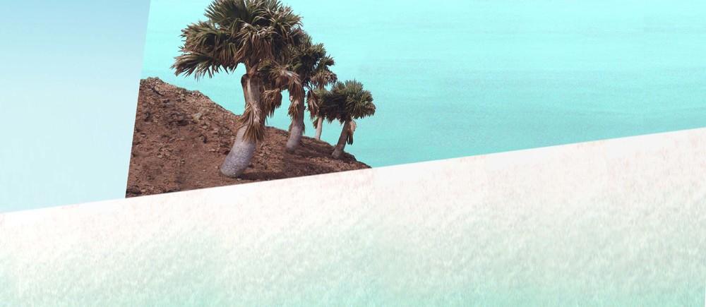 island-palm tree-ocean-beach-sabal-palm tree-curacao-christoffel-serra bientu
