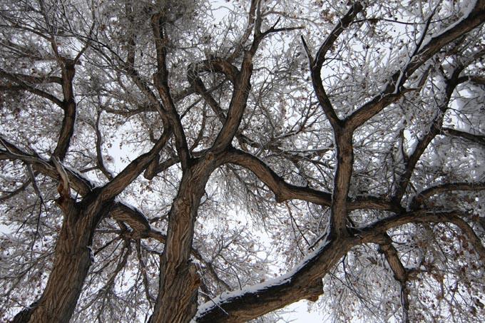 CottonwoodSnow.jpg