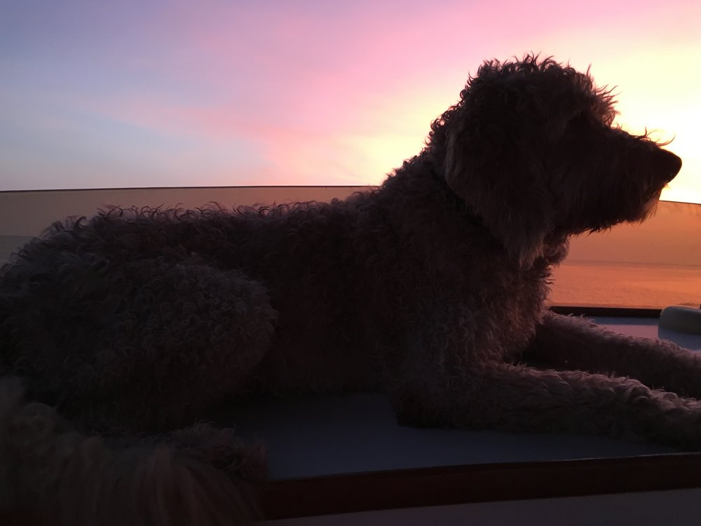 Our pet, RIDER, has his favorite place on our boat to enjoy the waters around Key West.