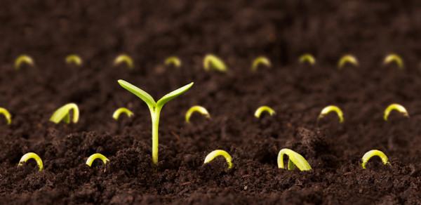 Biochar (Soil 3).jpg