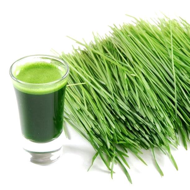 Purasana_ilustracja__0003s_0000_BARLEY GRASS.jpg