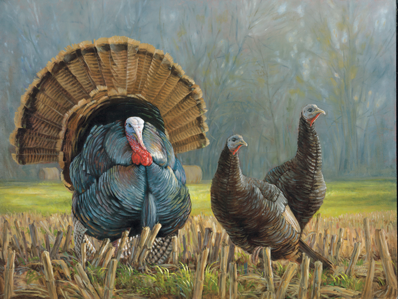 Ryan Kirby Art Wild Turkey Original Oil Paintings