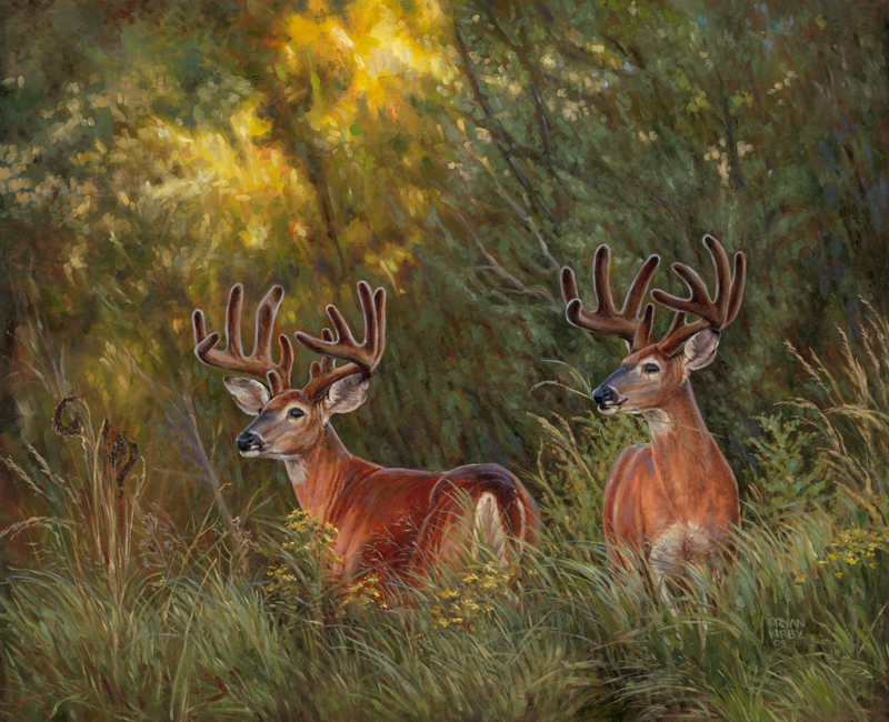 Original White-tailed Deer Painting Boys Night Out by Ryan Kirby