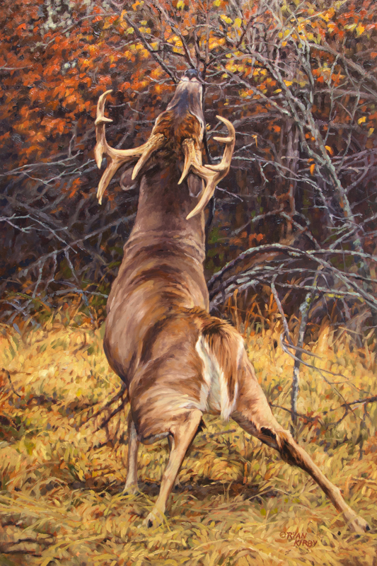 ryan_kirby_original_whitetail_deer_painting_scrape_line