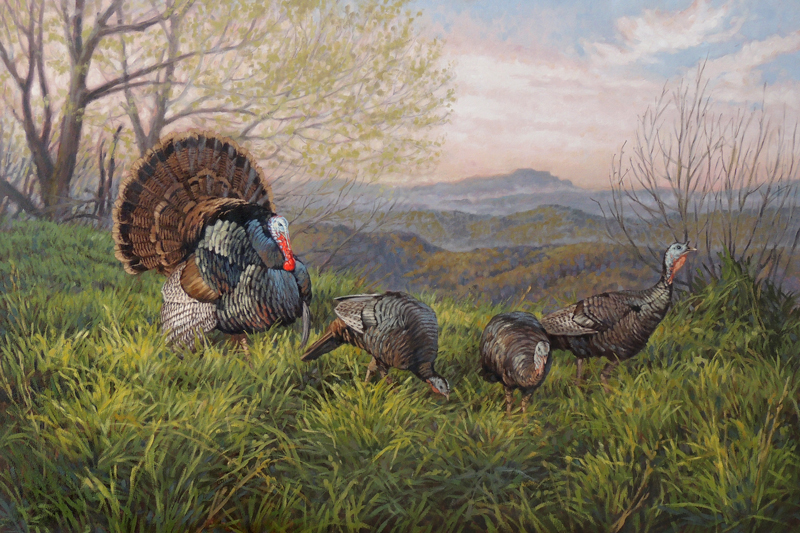 ryan_kirby_original_strutting_wild_turkey_painting_north_carolina_grandfather_gobbler