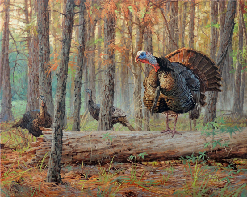 ryan_kirby_original_gobbling_wild_turkey_painting_see_and_be_seen