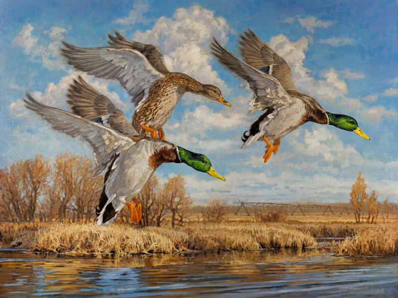 ryan_kirby_original_mallard_painting_final_approach