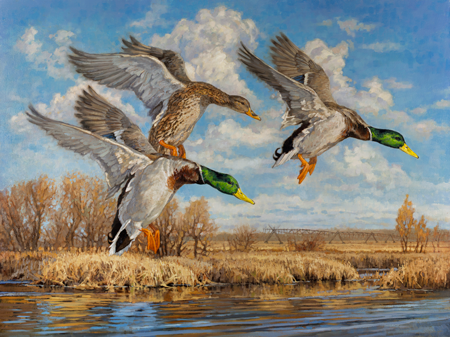 Ryan-Kirby-Mallard-Painting-Final-Approach.png