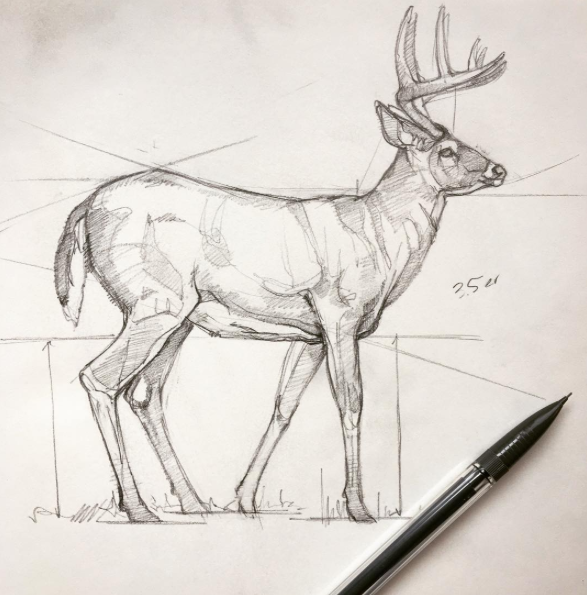 My very first #SketchDaily on  Instagram  - a broadside whitetail buck.