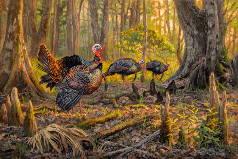 ryan_kirby_original_osceola_wild_turkey_painting_cypress_sunrise