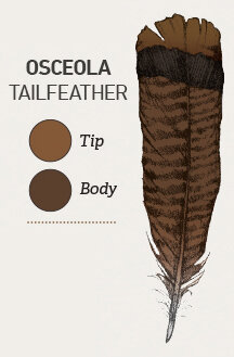 Osceolas exhibit dark chocolate-brown tips on the tailfeathers with chestnut brown tips on the smaller covert feathers.