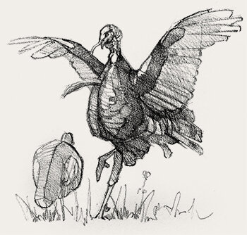 Osceola-Wild-Turkey-Subspecies-Flogging-Decoy-Sketch-Copyright-Ryan-Kirby.jpg