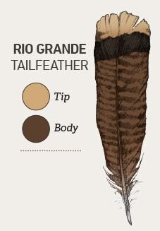 Rios have copper-colored tips on their tailfeathers and yellow-buff tipped covert feathers.
