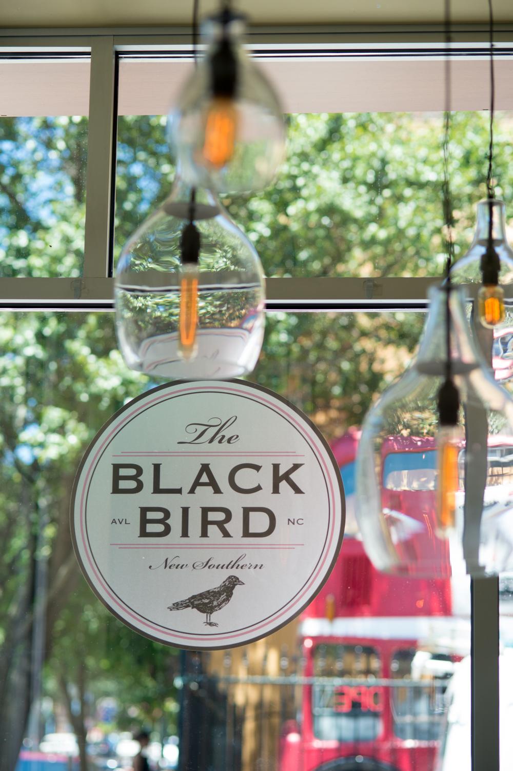 Blackbird012.jpg