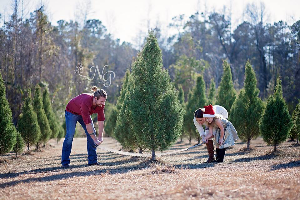 booths christmas tree farm conway, sc