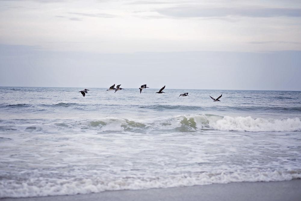 pawleys island pelicans