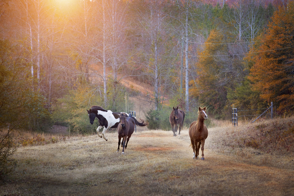 pickens, sc horse farm photography sessions