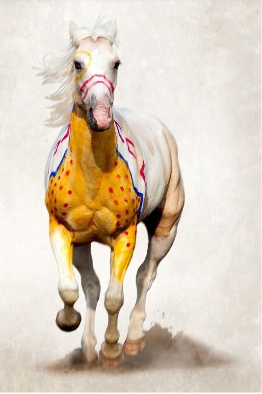 The War Pony Project | Brady Willette