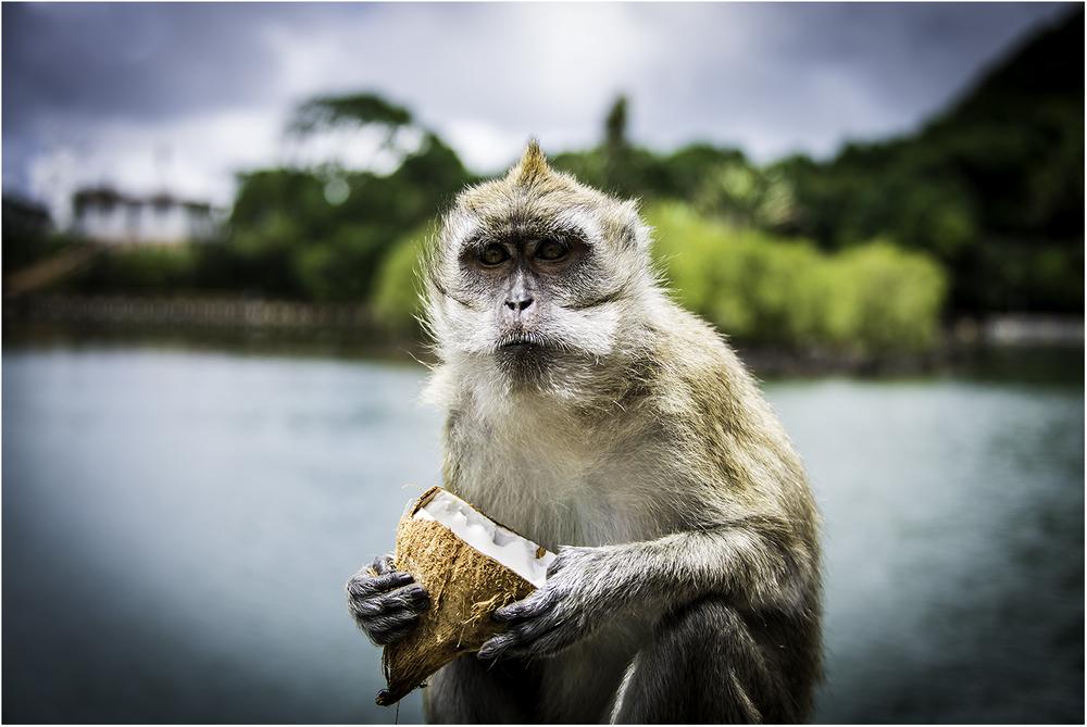 """""""Это мой орех!"""". Маврикий 2013"""
