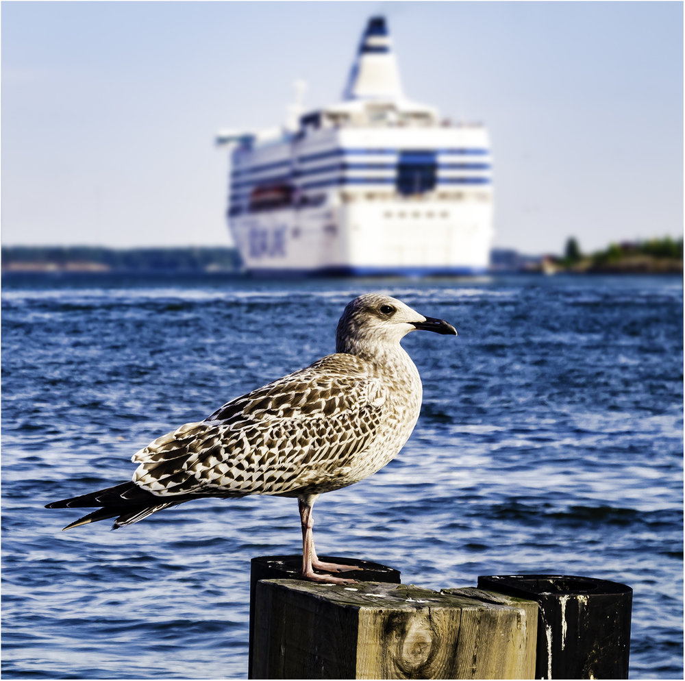 Провожая в дальнее плавание. Хельсинки