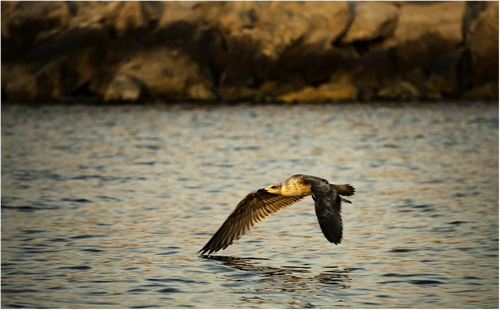 Касаясь крылом синего моря. Камбрильс (Испания)