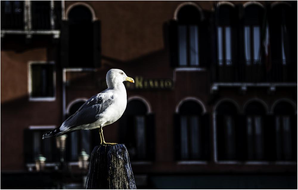 Венецианская штучка