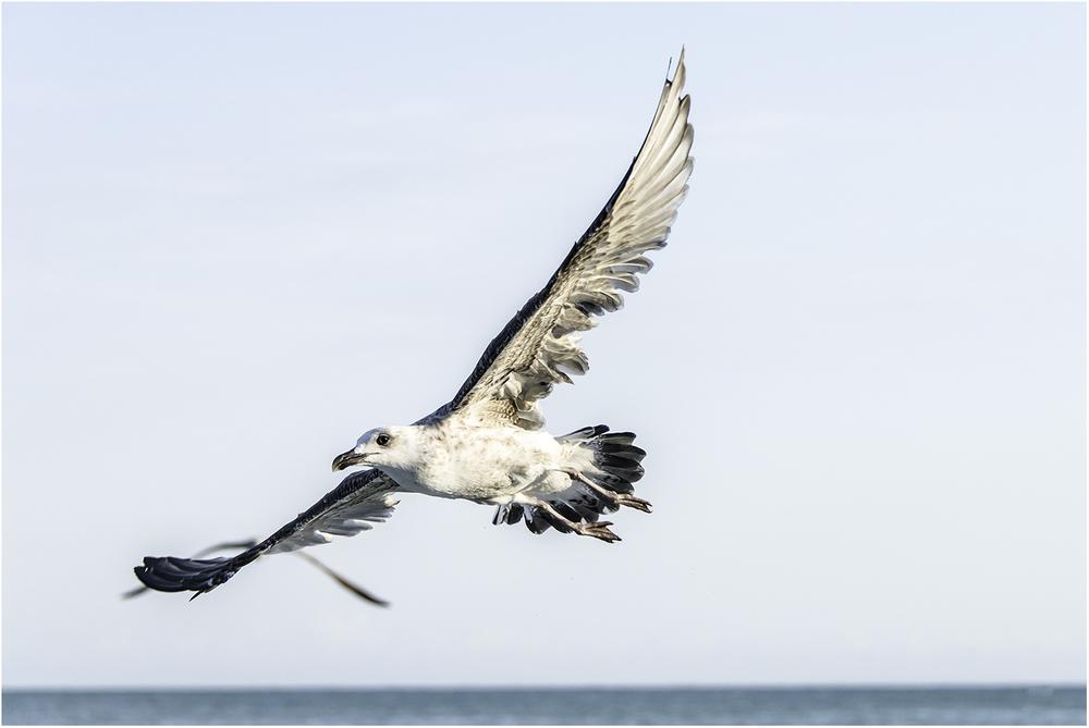 Паря над Черным морем. Элените (Болгария)