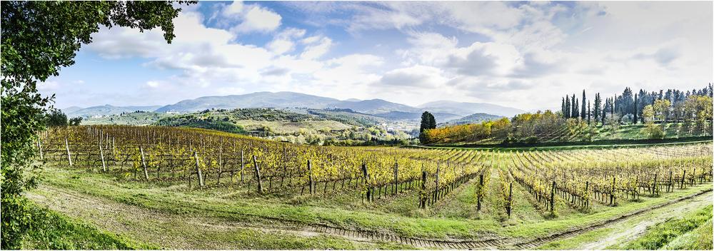 Виноградники Кьянти (Тоскана)
