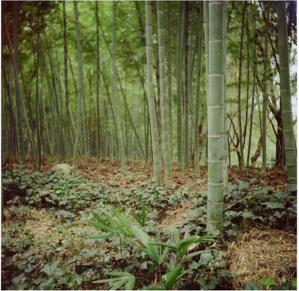 Бамбуковая аллея в Garden Park